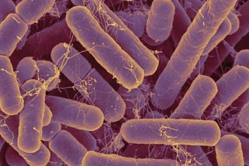 Microbiota y salud