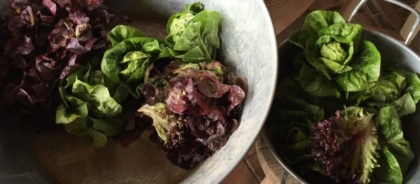 Raw diet o dieta crudívora
